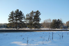 Winter landscape. Trees near the road on a sunny winter day. Royalty Free Stock Photos