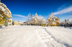 Winter landscape with trees in the park with snow and blue sky Royalty Free Stock Photos
