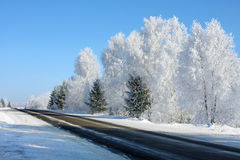Winter landscape with trees on road Royalty Free Stock Photography