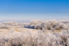 Winter landscape with trees. Rural landscape with trees covered with frost Stock Photos