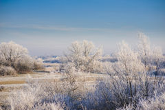 Winter landscape with trees. Rural landscape with trees covered with frost Royalty Free Stock Photos