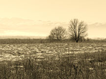 Winter landscape trees Royalty Free Stock Image