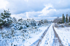 Winter landscape with trees in the snow Stock Photography