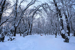 Winter landscape with trees and snow royalty free stock photo
