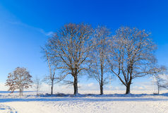 Winter landscape trees snow covered fields windmills Stock Image