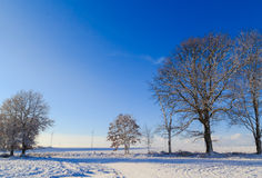 Winter landscape trees snow covered fields windmills Stock Photos
