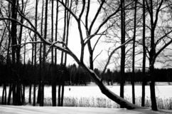 Black and white winter landscape royalty free stock image