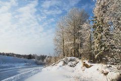 Winter landscape. Trees with snow near a road Stock Photos