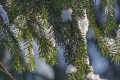 The winter landscape. The trees in the snow. The tall trees in the Park covered with snow and illuminated by the sun Stock Image