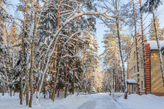 The winter landscape. The trees in the snow. The tall trees in the Park covered with snow and illuminated by the sun Stock Images