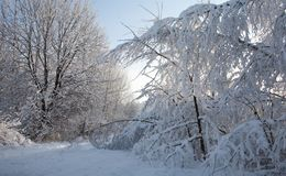 Winter landscape with trees snow wrapped Stock Images