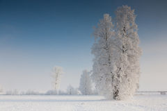 Winter landscape with trees snow wrapped Royalty Free Stock Photo
