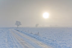 Winter landscape with trees snow wrapped and road Stock Images