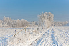 Winter landscape with trees snow wrapped and road Royalty Free Stock Images