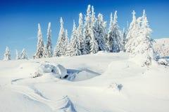 Winter landscape trees snowbound Stock Photo