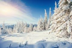 Winter landscape trees snowbound Stock Photography