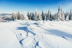 Winter landscape trees snowbound Royalty Free Stock Images