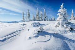 Winter landscape trees snowbound Stock Photos