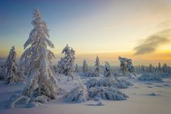 Winter Landscape with trees. And Sun Royalty Free Stock Image