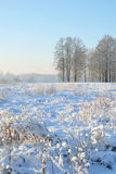 Winter landscape with trees. Stock Photo