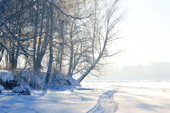 Winter landscape with trees. Stock Photography