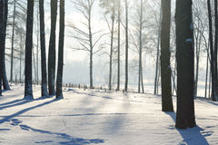 Winter landscape with trees. Royalty Free Stock Photo