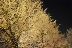Winter landscape of trees. Tree branches covered with snow. Winter night frost. The light and shadow Stock Photos