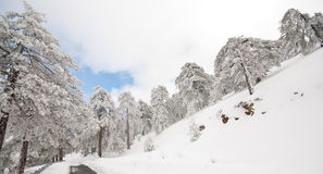 Winter Landscape Troodos mountains, Cyprus stock photography
