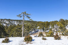 Winter landscape in Troodos Mountains, Cyprus Stock Photography