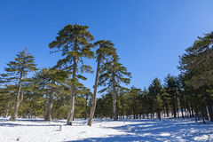 Winter landscape in Troodos Mountains, Cyprus Royalty Free Stock Image