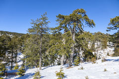 Winter landscape in Troodos Mountains, Cyprus Stock Photo