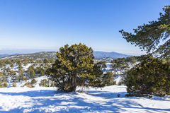 Winter landscape in Troodos Mountains, Cyprus Royalty Free Stock Photos