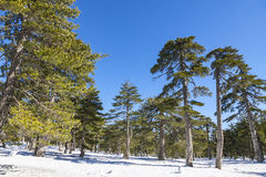 Winter landscape in Troodos Mountains, Cyprus Royalty Free Stock Photography
