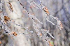 Winter landscape with twigs of shrubs in frost Stock Images