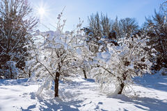 Winter landscape with two trees covered by snow Royalty Free Stock Photo