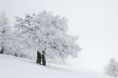 Winter Landscape, Ukraine Royalty Free Stock Photo