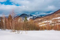 Winter landscape of Uzhanian National Nature Park. Leafless birch trees on slopes. high mountain with snowy peak in the distance royalty free stock image