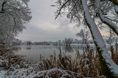 winter landscape. view from the coast of the river, lake, pond in a snow-covered park through the coastal trees and reeds in cloud Stock Image
