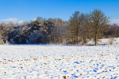 Winter landscape view fields forests covered snow Stock Image