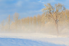 Winter landscape view fields forests covered snow fog Stock Photos