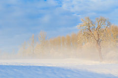 Winter landscape view fields forests covered snow fog Stock Photography