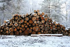 A winter landscape view of a pile of pine logs in Perthshire, Scotland, UK. A cold winter landscape view of a pile of pine logs in Perthshire, Scotland, UK Royalty Free Stock Photography
