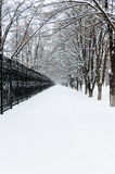 Winter landscape. View on a snowy path, leaving into the distance between the black iron fence and alley trees Stock Photos