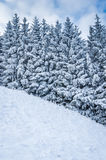 Winter landscape. View winter landscape with snowy trees in the Slovak mountains Stock Images