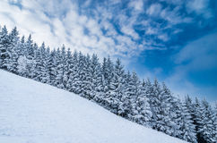 Winter landscape. View winter landscape with snowy trees in the Slovak mountains Stock Photo