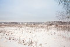Winter landscape with village, forest and field. The branches of birch in the foreground royalty free stock images