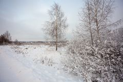 Winter landscape with village, forest and field. Snow-covered trees by the road royalty free stock photo