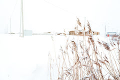 Winter landscape in the village. Reeds in the snow in a forest. Sunlight stock images