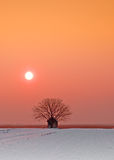 Winter landscape,Vojvodina. Small houses and a tree in the sunset Royalty Free Stock Images