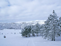 Winter landscape W Stock Photography